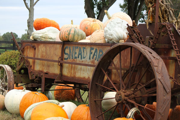 Snead's Farm